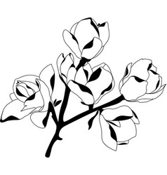 Silhouette blossoming magnolia black on white vector