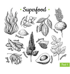 superfood hand drawn vector image