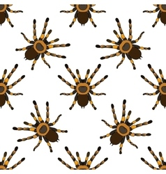 Seamless pattern with tarantula spider vector image