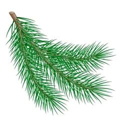 fir branch vector image vector image
