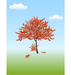 Autumn acacia vector