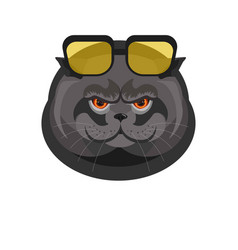 Black cat with sunglasses portrait isolated on vector