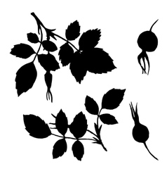 Branches silhouettes of briar with leaves vector