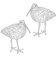 eurasian curlew bird vector image