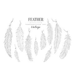 Feathers Collection Vintage Sketch vector image