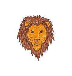 male lion big cat head drawing vector image