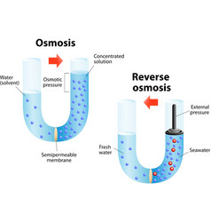 Osmosis and reverse osmosis vector image