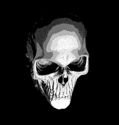 human skull on dark background vector image