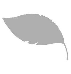 isolated grey feather icon vector image