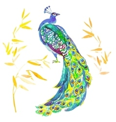 Beautiful Peacock Isolated On White Background vector image