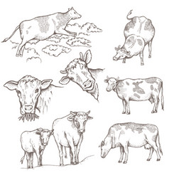 set of bulls vector image