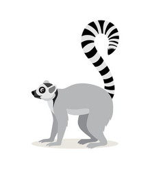 african animal cute lemur with striped long tail vector image