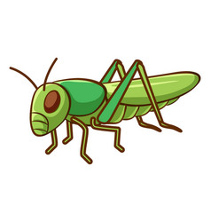 green cricket on white background vector image