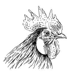 Hand sketch rooster head vector image vector image