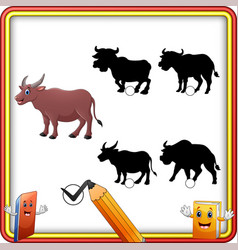 find the correct shadow buffalo animal education vector image