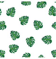 green leaves of tropical plant and tree on white vector image