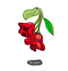 hot pepper vintage colorful vector image