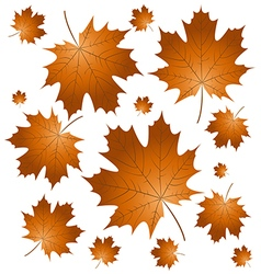 Maple leaves6 vector