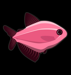 rose fish on black background vector image