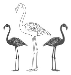 set of of flamingos vector image