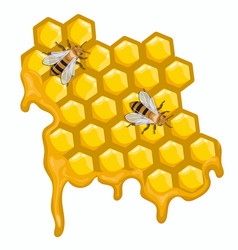 two bees are sitting on honeycombs vector image