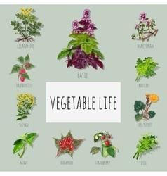 Useful varieties herbs big set vector