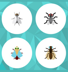 Flat icon fly set of hum mosquito tiny and other vector