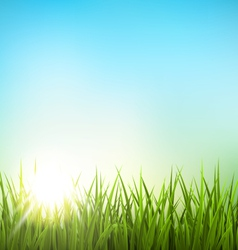 Green grass lawn with sunrise on blue sky Floral vector image