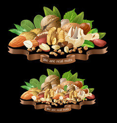 Mix different types nuts vector