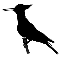 Silhouette of hoopoe vector