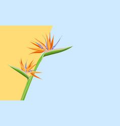 top view flatlay with orange strelizia on color vector image