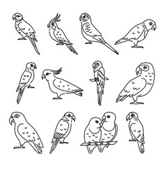 set of parrot icons in thin line style vector image
