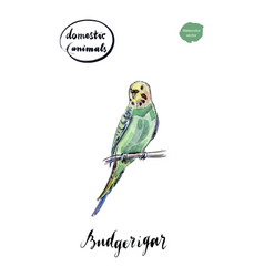 watercolor green and yellow budgerigar vector image vector image