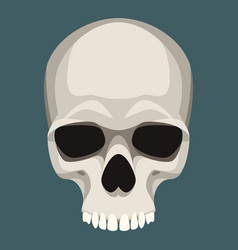 Human skull flat style front vector