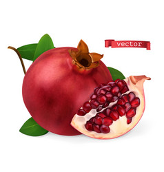 pomegranate image fresh fruit 3d realistic icon vector image