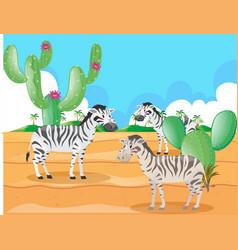 zebra living in the desert vector image