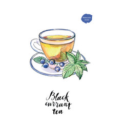 watercolor glass cup of black currant tea vector image