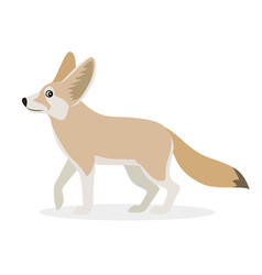 african animal cute fennec icon isolated on white vector image