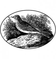 engraving of bird vector image