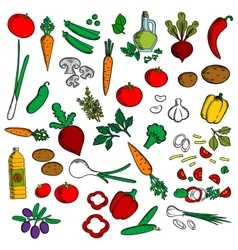 Healthy vegetables with condiments sketch icon vector image vector image