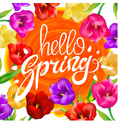 hello spring colotful tulips flowers white vector image