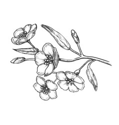 Sakura flower branch tree element retro vector