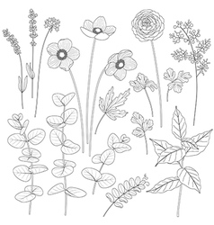 flowers outline1 vector image