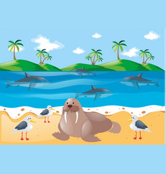 sea animals and pigeons on the beach vector image