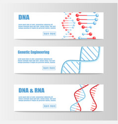 set scientific banners with molecular structure vector image