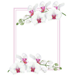 White orchids with frame vector