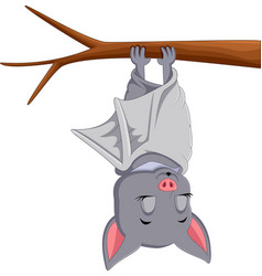 cute bat cartoon sleeping vector image