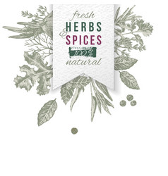 herbs and spices composition with paper emblem vector image vector image