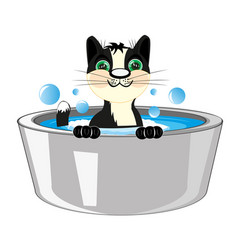 Cat is washed in basin vector