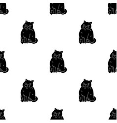 Exotic shorthair icon in black style isolated on vector